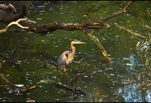 Toronto's Iconic High Park: Grenadier Pond No. 18