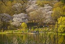 Toronto's Iconic High Park: Grenadier Pond No. 20