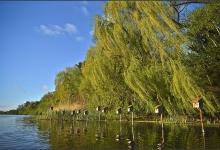 Toronto's Iconic High Park: Grenadier Pond No. 24