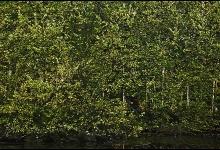 Toronto's Iconic High Park: Grenadier Pond No. 2