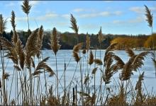 Toronto's Iconic High Park: Grenadier Pond No. 6